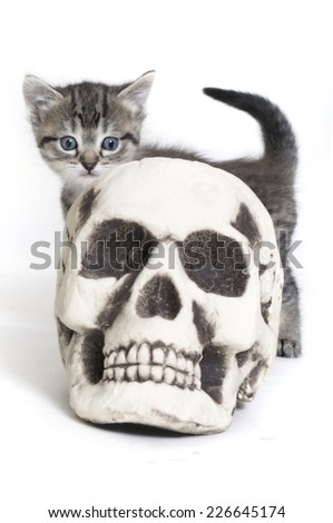 Halloween Kitten - stock photo