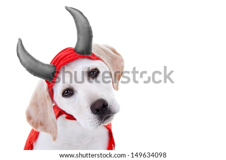 Halloween Labrador puppy dog in devil costume isolated on white with copy space - stock photo