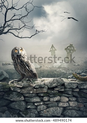Halloween mystical spooky background with owl on the stone wall