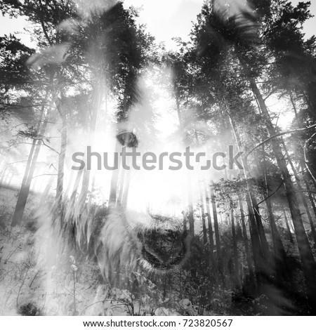 Halloween night background with mystical wolf in spooky forest.