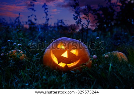 Halloween pumpkin at night lying on a pumpkin field. - stock photo