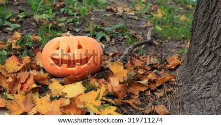 Halloween pumpkin in autumn forest  - stock photo
