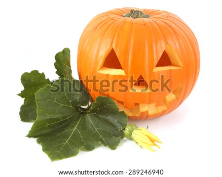 Halloween Pumpkins on white with leaves - stock photo