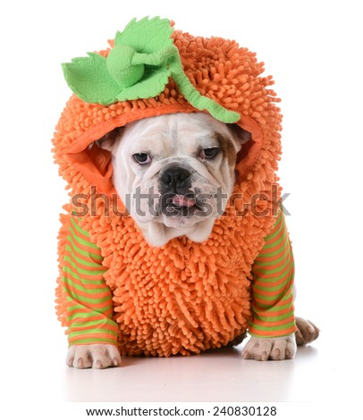 Dog Halloween Costume Stock Images, Royalty-Free Images & Vectors ...
