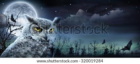 halloween scene with owl and full moon  - stock photo