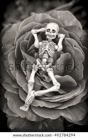 Halloween skeleton resting on a rose bed.  Black and white.