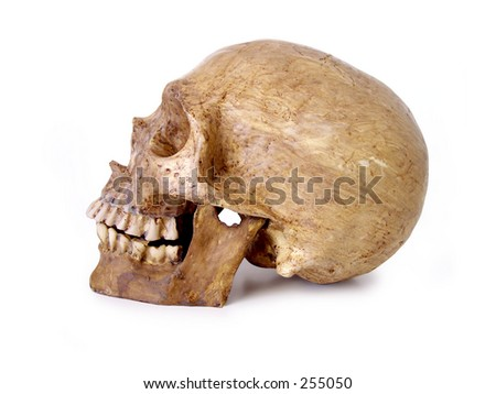 Halloween Skull with jaw. Path included in file. - stock photo