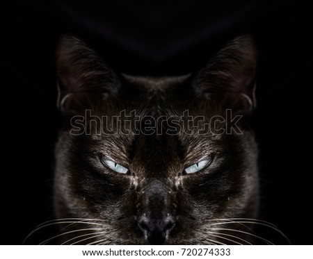Halloween Theme. Black cat scared eyes scary. Black background