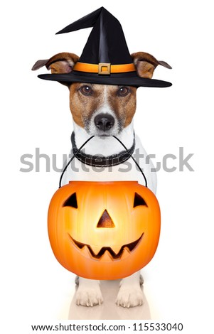 halloween trick or treat pumpkin witch dog - stock photo