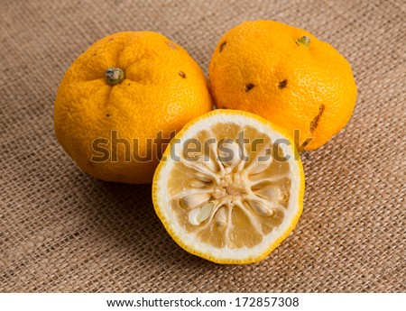 Halved and whole yuzu fruits on a piece of  sackcloth. Yuzu is a hybrid between Citrus ichangensis and Citrus reticulata, famous for aromatic zest. Formerly know as Citrus junos.  - stock photo
