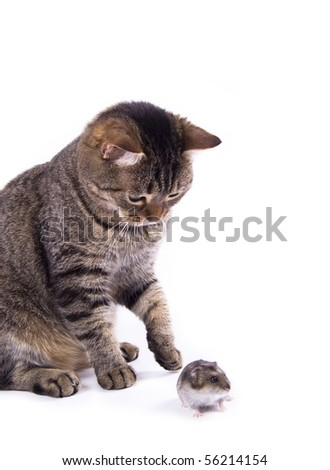 Hamster and cat on the white isolated background