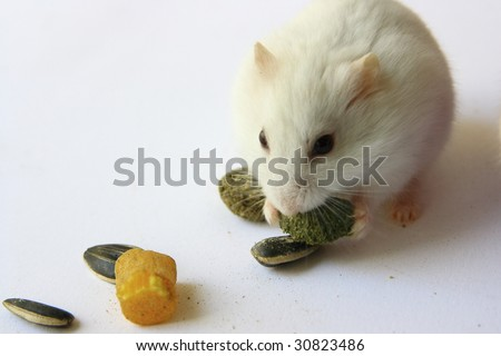 Hamster and Small snack - stock photo