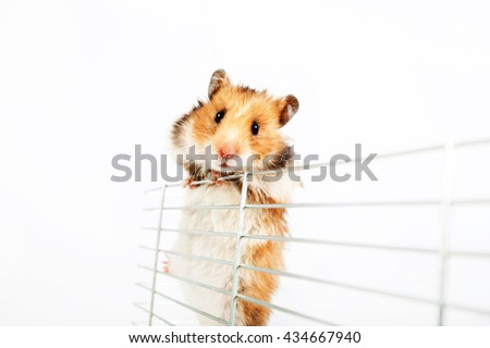 hamster cage climbs up isolated on white background - stock photo