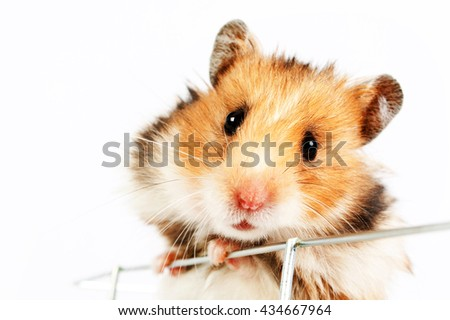 hamster cage climbs up isolated on white background