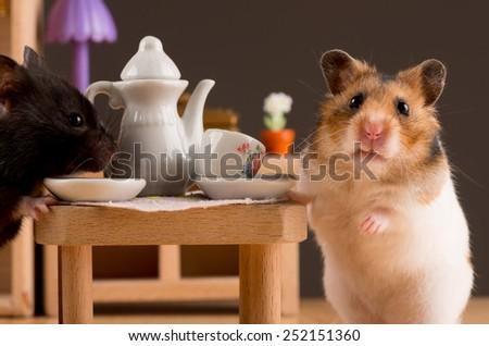 hamster drinking coffee/hamster drinking coffee - stock photo
