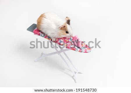 Hamster. Funny hamster sitting on ironing board with iron - stock photo