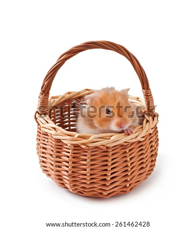 hamster in a basket isolated on a white background - stock photo
