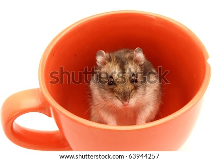 Hamster in a cup on a white background - stock photo