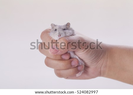 Hamster in hand young on white background.