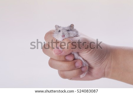 Hamster in hands women.