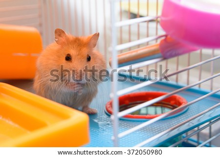 Hamster 're going to drink . Within their own homes - stock photo