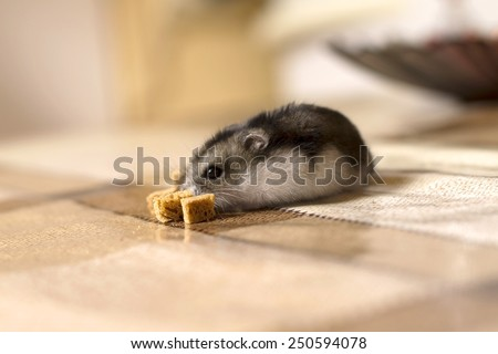 hamster reaching for crackers and sniffs it