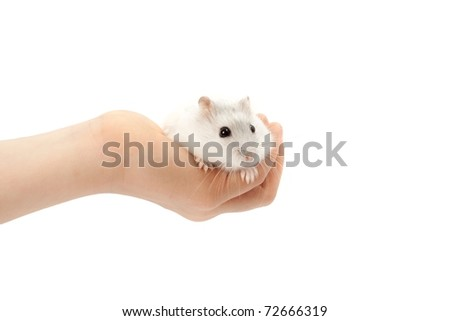 Hamster relaxing in hand isolated on white - stock photo