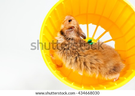 hamster running in the running wheel isolated on white background - stock photo