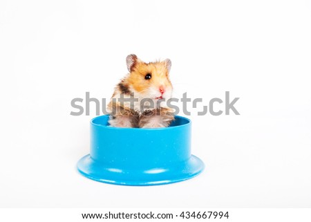 hamster sitting in the feeding trough isolated on white background - stock photo