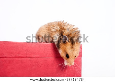 Hamster sitting on the box and looking down