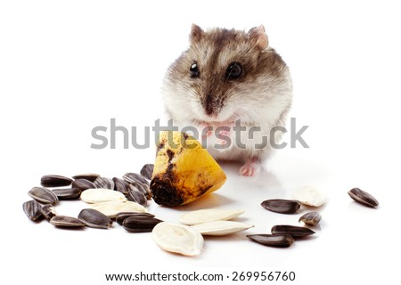 hamster with grain isolated on white  background - stock photo