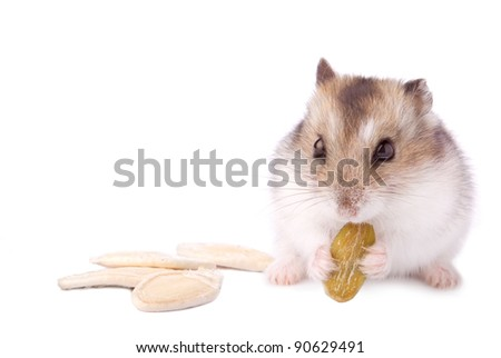 hamster with pumpkin seed on white
