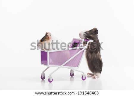 Hamsters. Funny hamsters with shopping cart