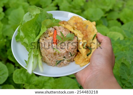 Hand and Healthy Food on Green vegetable plot - stock photo