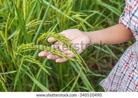 hand and paddy rice - stock photo