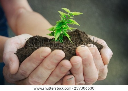 Hand and plant - stock photo