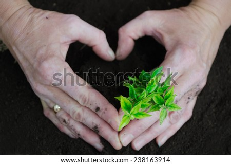 Hand and plant,heart - stock photo