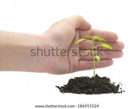 hand covering green plant over white - stock photo
