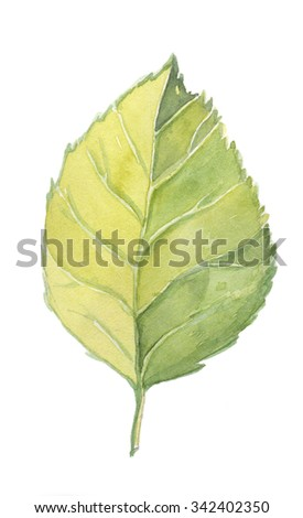 Hand draw watercolor green leaf - stock photo