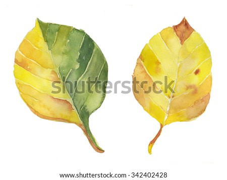Hand draw watercolor yellow leaves - stock photo