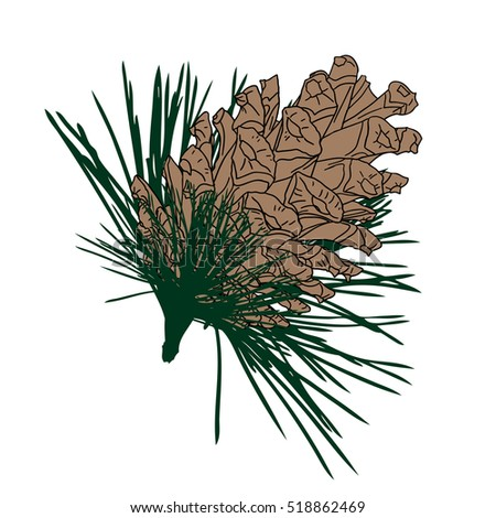 Western White Pine Drawing