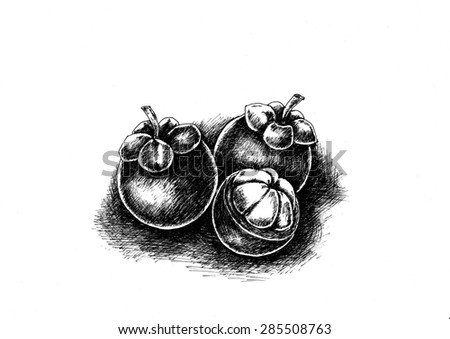 Hand drawing mangosteen