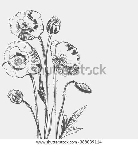 Hand drawing of a flower - poppy. Light background dark pattern. - stock photo