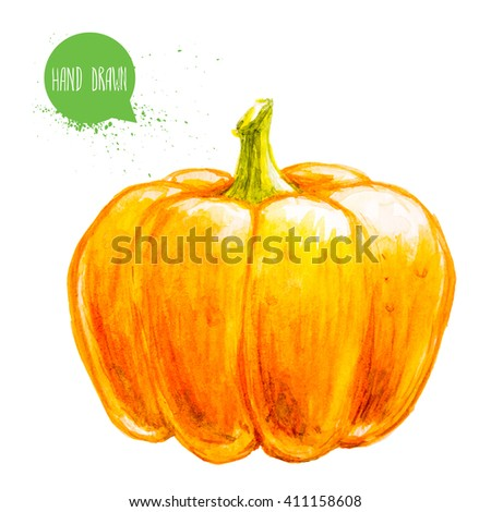 Hand drawn and painted watercolor ripe pumpkin. Isolated on white background. Vegetable illustration. - stock photo