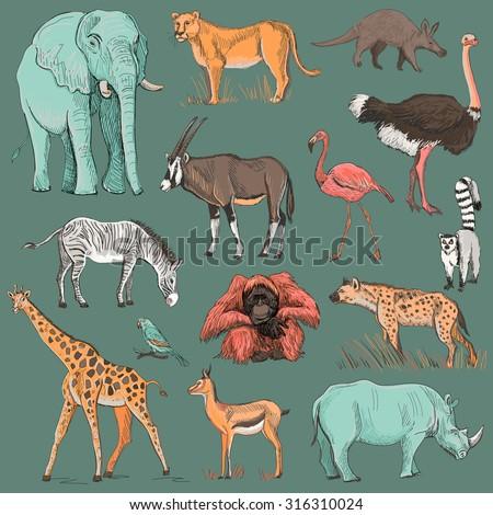 Hand drawn animal planet illustration such as elephant, giraffe, lioness, hyena, orangutan, parrot, rhino, zebra, deer, lemur, ostrich, anteater, flamingo - stock photo