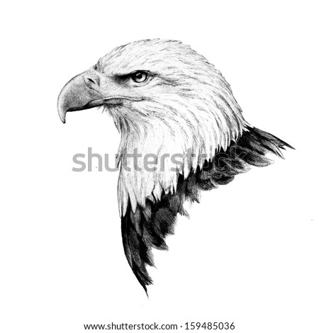 Hand Drawn Bald Eagle Head Sketch Stock Illustration ...