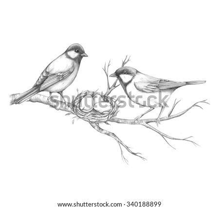 Hand drawn birds titmouse on a tree branch with a nest pencil sketch