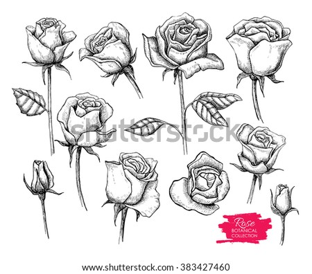 Hand drawn botanical rose set. Engraved collection. Great for greeting cards, backgrounds, wedding invitations - stock photo