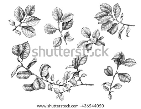 Hand drawn branches with leaves.  Sketch of plants. - stock photo