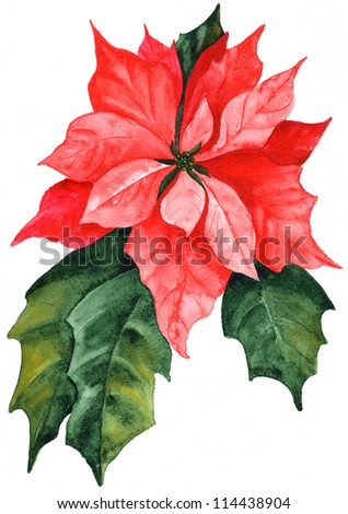 hand drawn christmas red poinsettia - stock photo